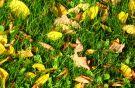 Buntes Herbstbasteln
